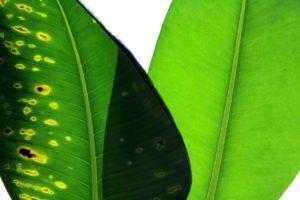 plants-3192593_1280